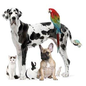 article image family pet show