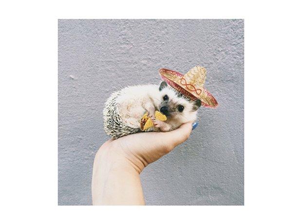 lionel the hedgehog