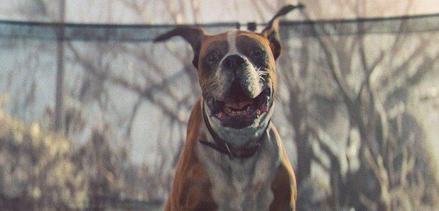 John Lewis dog Buster